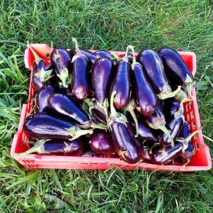 Garden Fresh Eggplant - Brookfront Farms
