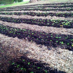 Garden seedlings planted to begin the growing season