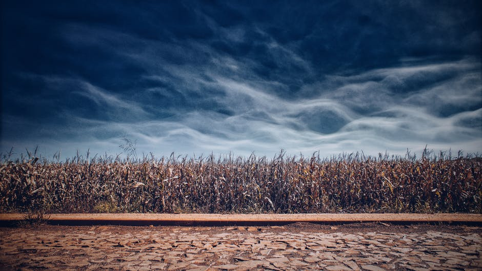 Modern Agriculture devastates our planet and destroys soil